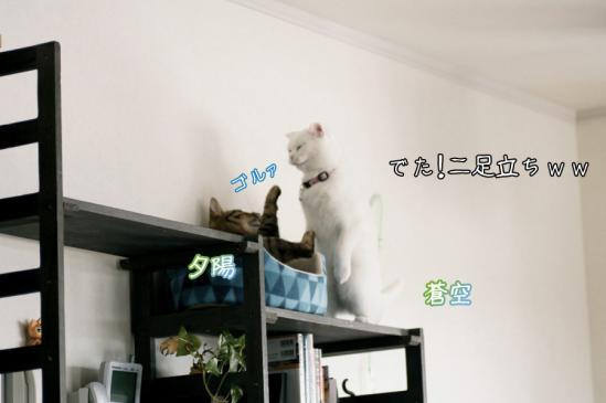 8_20120325091710.jpg