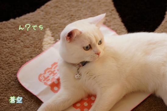 8_20120328071142.jpg