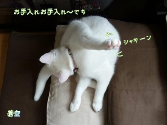 8_20120425073746.jpg