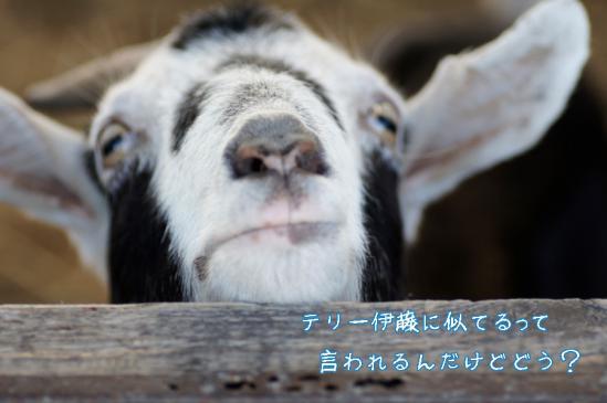 8_20120504231932.jpg