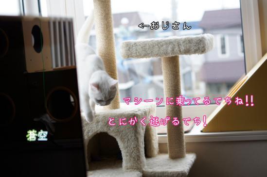 8_20120508072622.jpg
