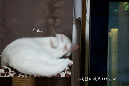 8_20120711065404.jpg