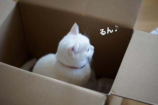 8_20121118213819.jpg