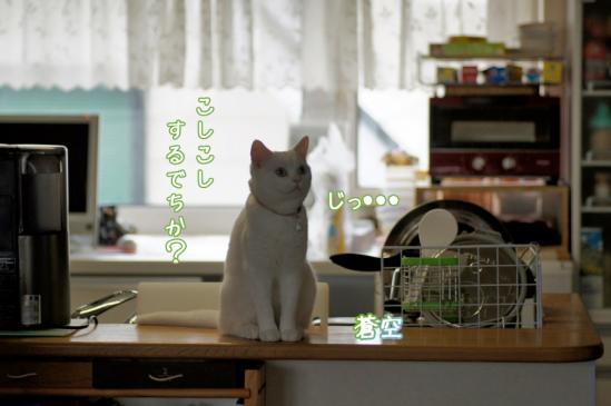 9_20120324084642.jpg