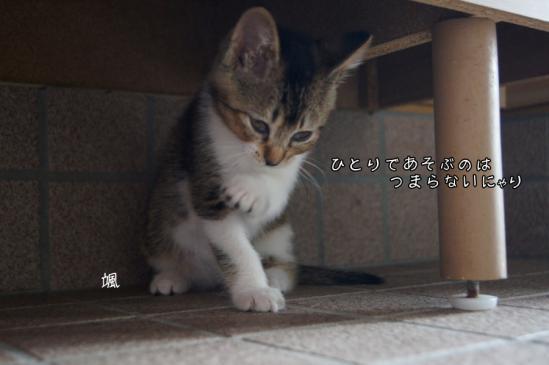 9_20120726132949.jpg