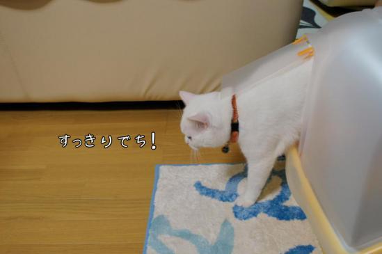 9_20121111010423.jpg