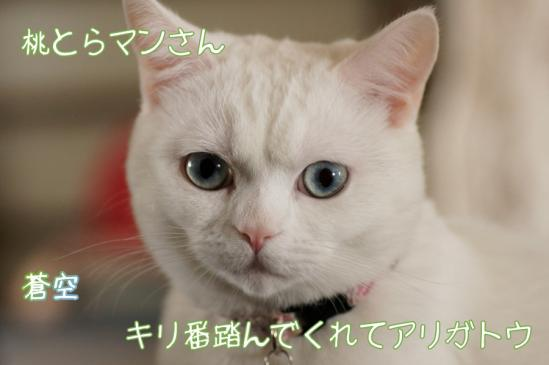 th_7_20120312111040.jpg