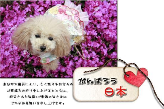 20110403_9999_179.jpg