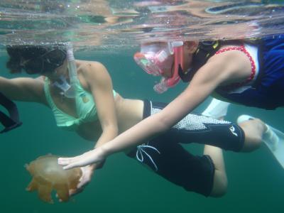 jellyfish5.jpg