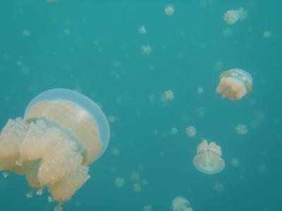 jellyfish8.jpg
