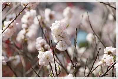 2010_0425_135824AA.jpg