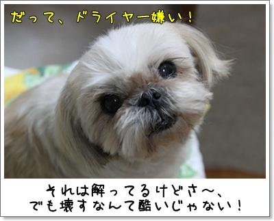 2010_0601_200225AA.jpg