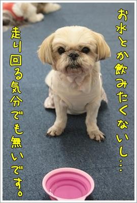 2010_0702_135956AA.jpg