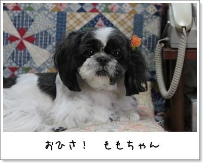 2010_0704_170034AA.jpg