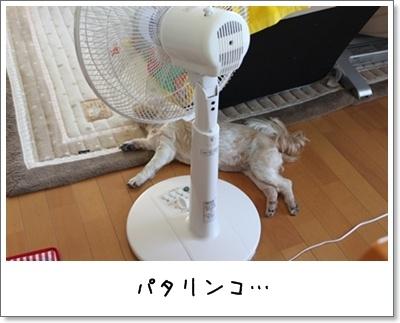 2010_0718_091737AA.jpg