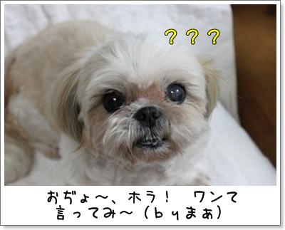 2010_0803_195356AA.jpg