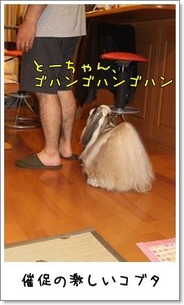 2010_0813_213156AA.jpg