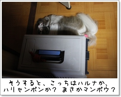 2010_0817_182634AA.jpg