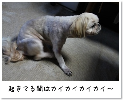 2010_0817_182903AA.jpg