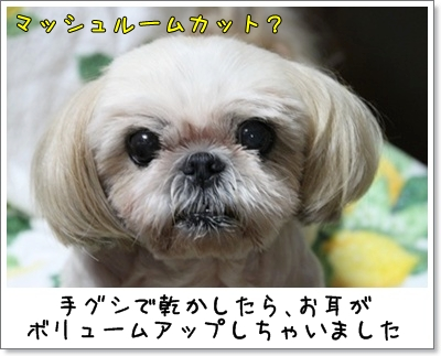 2010_0902_193834AA.jpg