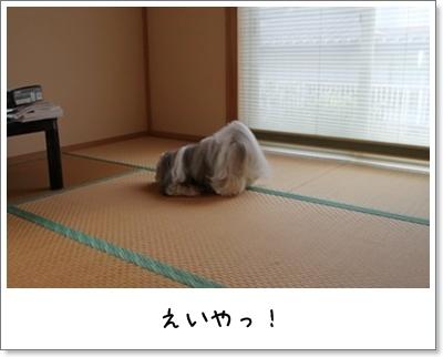 2010_0903_074516AA.jpg