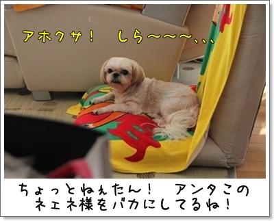 2010_0905_143805AA.jpg