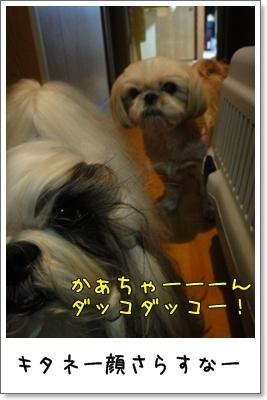 2010_0913_192227AA.jpg