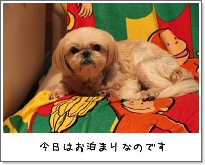 2010_0924_233444AA.jpg