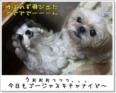 2010_1007_195117AA.jpg