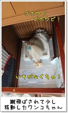 2010_1009_082251AA.jpg