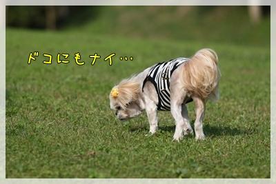 2010_1016_142842AA.jpg