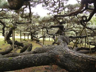 この複雑な枝に注目!!