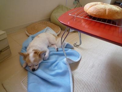 寝てるふりしてパンを狙う。かも。
