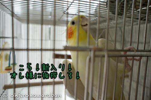 03DSC00096.jpg
