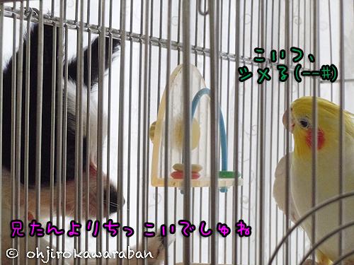 06DSCN0833.jpg