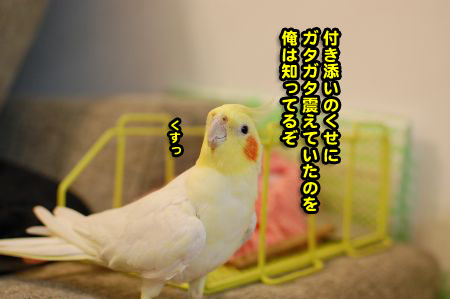 *DSC_1717_05