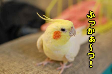 *DSC_1694_01