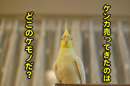 *DSC_1728_07
