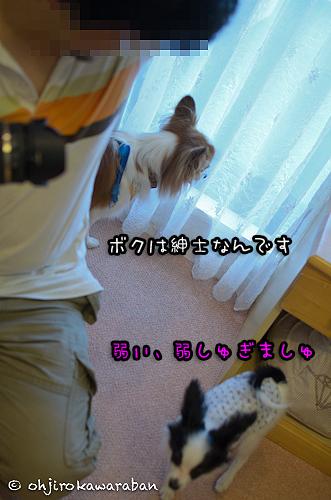 *24-DSC_7940