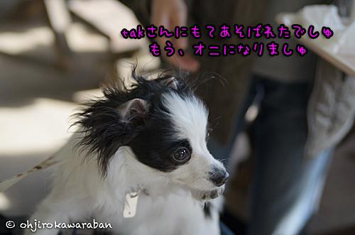 *13-DSC_8848