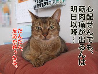2010_02210006_20101018130458.jpg