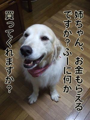 2010_06280030_20101122215004.jpg