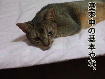 2010_07130016_20100801081957.jpg