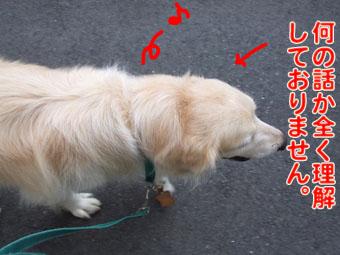 2010_07210013.jpg