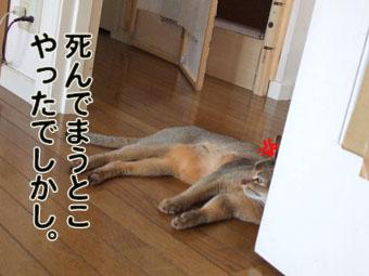 2010_07240006.jpg