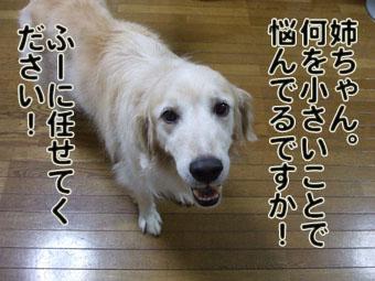 2010_08020017.jpg