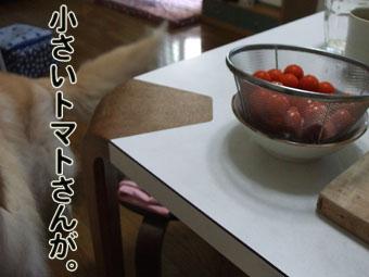 2010_08070002.jpg