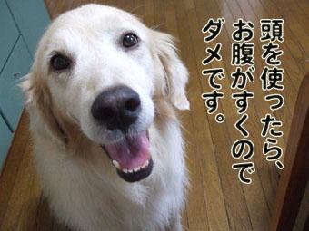 2010_08070012.jpg