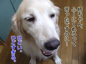 2010_08070017.jpg