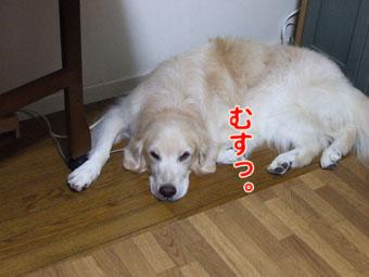 2010_08070032.jpg